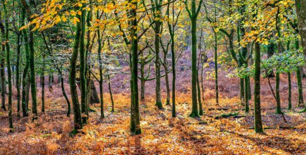 Fiat hat in Hohenlockstedt tausende Bäume gepflanzt