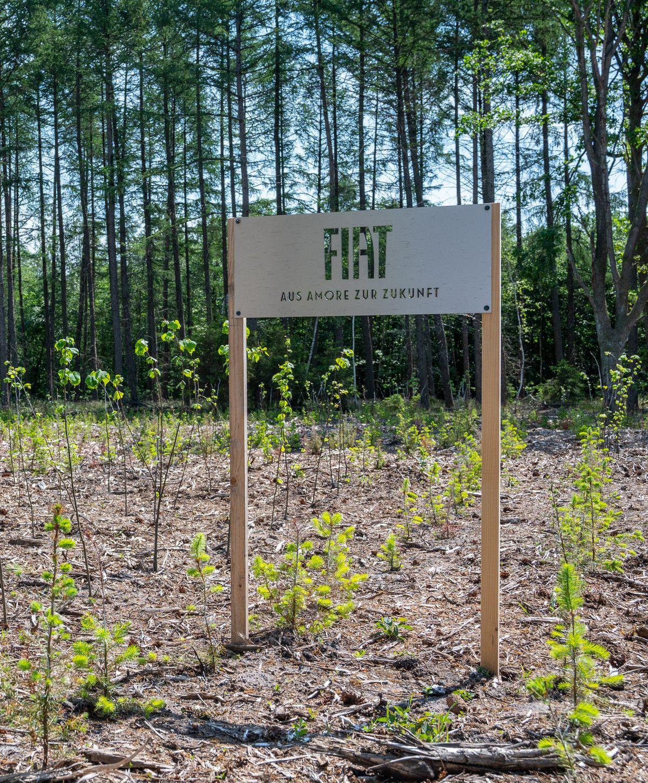 Plant-My-Tree: Fiat hat in Hohenlockstedt tausende Bäume gepflanzt