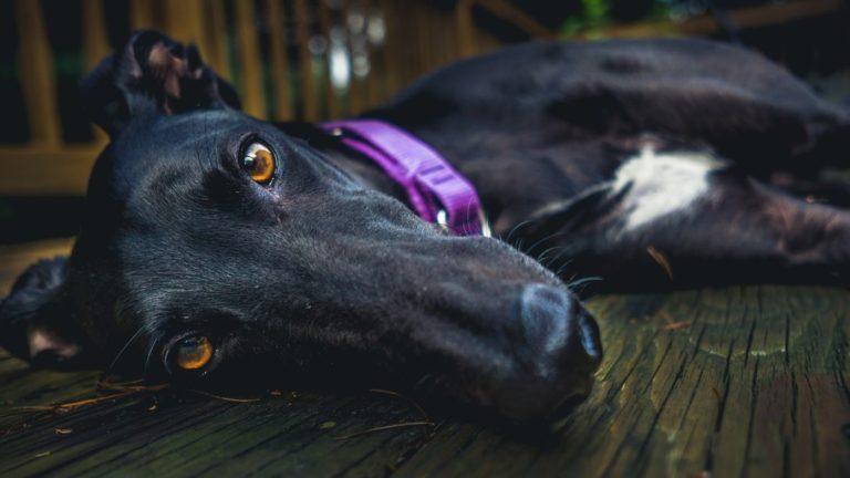 Gelesen: Fashion-Accessoires für Hunde